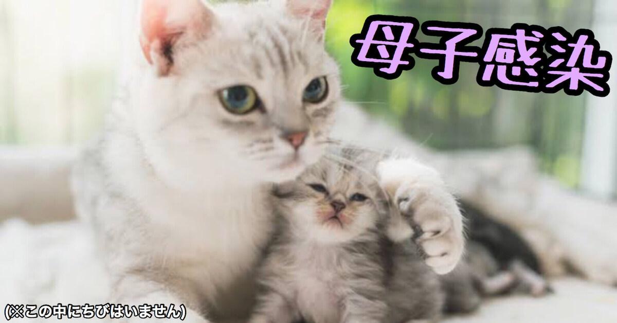 猫風邪の母子感染(垂直感染)