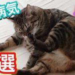 猫のメイン12種類の病気一覧