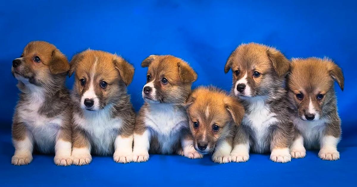 犬の数に応じて月々の出費は倍々に