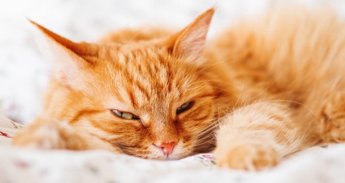 猫の保険加入は必須