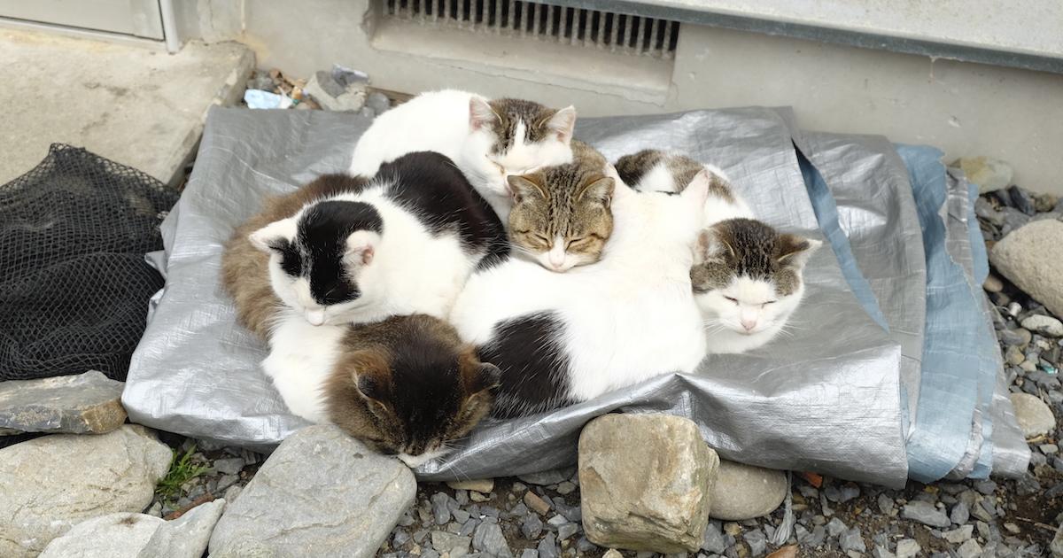 真冬の野良猫の過ごし方は猫団子がメイン