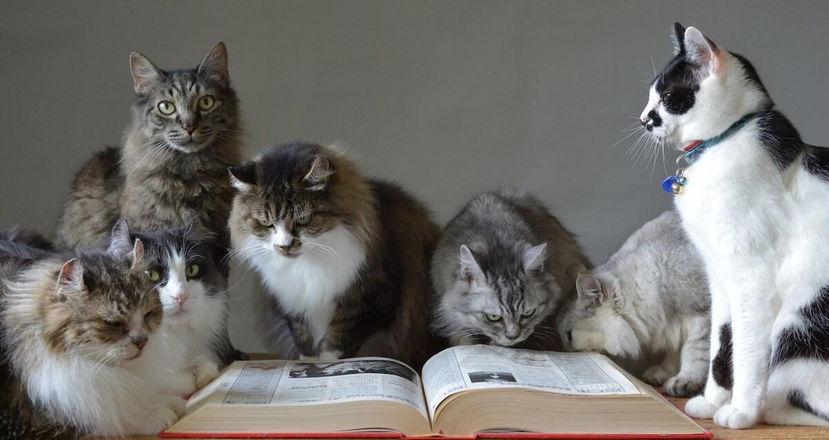 猫の多頭飼いでの問題解決方法