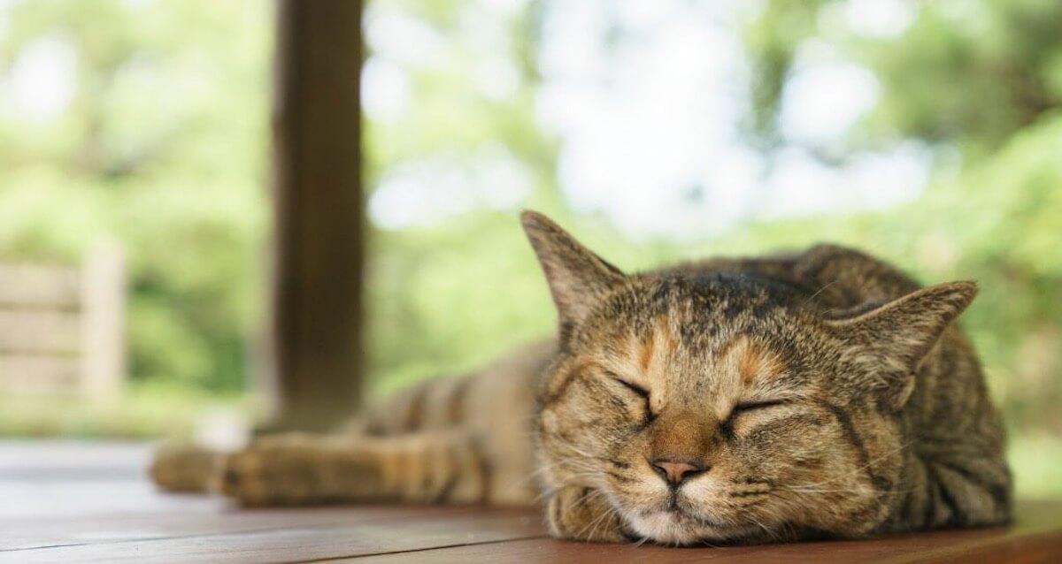 猫の夏バテ