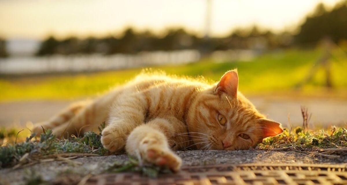 猫の安楽死とは