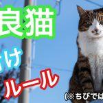 野良猫に餌付けをするのは犯罪?