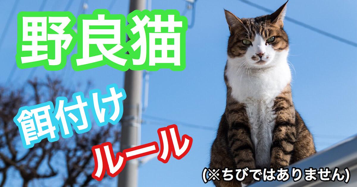 野良猫への餌付けルール