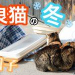 野良猫は地獄の真冬にどう生き残るの?