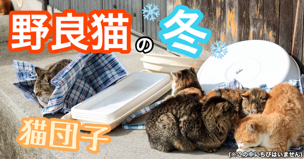 猫団子で過ごす野良猫の冬