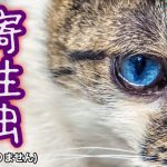 猫の寄生虫の病気とは?
