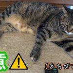 猫の生活習慣病とは?