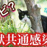 猫の皮膚糸状菌症とは?