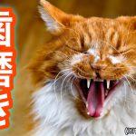 猫の歯磨きと頻度・歯ブラシの種類について学ぼう
