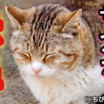 【危険信号】猫の鼻が赤やピンクになるのは疲れ・ストレス等トラブルのサイン!