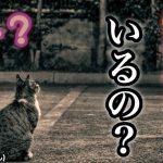 猫が誰もいない方向を見て鳴くのはフェレンゲルシュターデン現象?