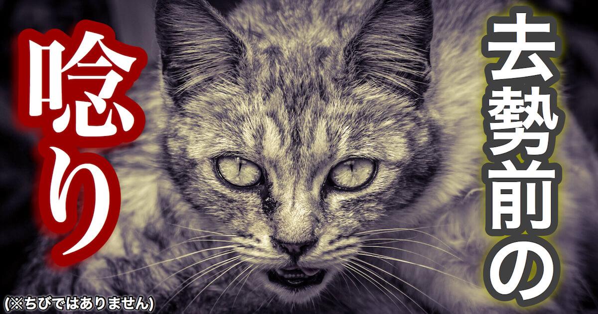 猫の去勢前の唸り