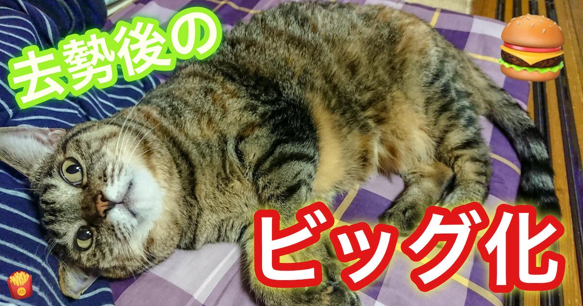 猫が去勢後に太る