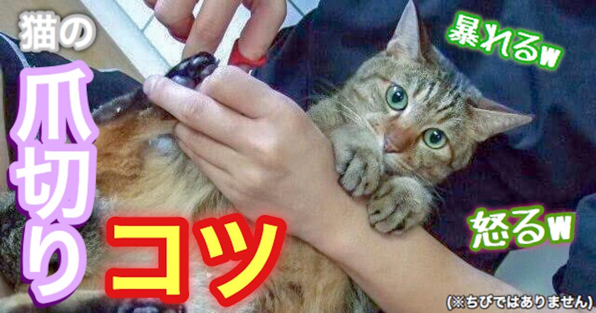 猫の爪切りのコツ