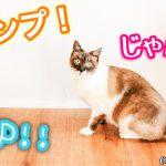 猫の驚異的ジャンプ力!人間換算すると10倍?