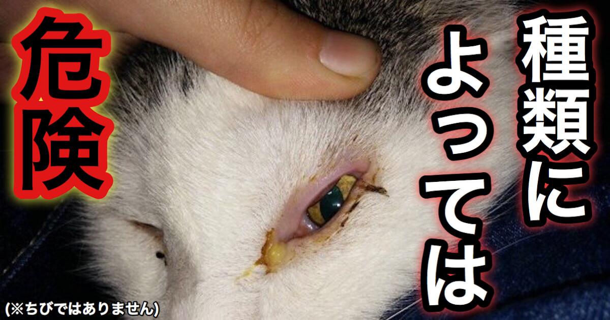 猫の目やには危険なものもある