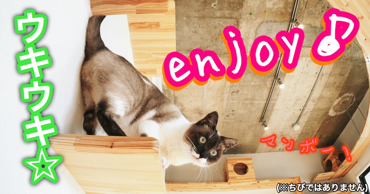 楽しんでる時の猫のサイン