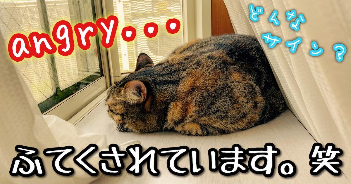 怒ってふてくされる猫