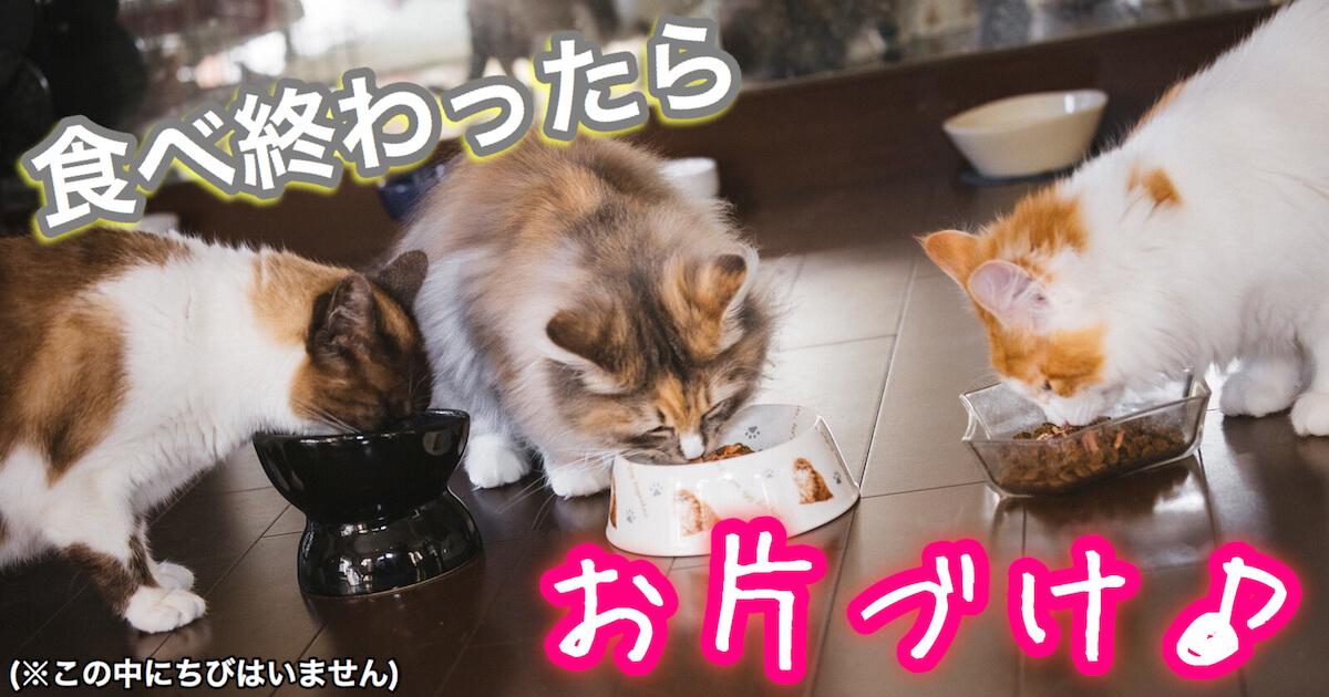 猫が食べ終わったら片付け
