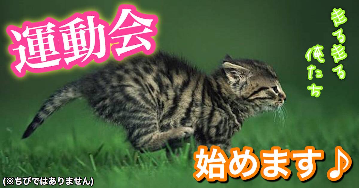猫の大運動会