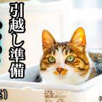 引越しのときに猫にストレスをかけない7つのポイント