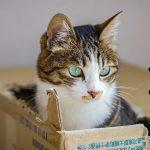 猫がダンボールを食べる3つの理由とやばいリスク…