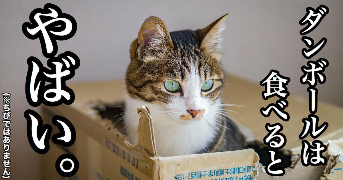 猫がダンボールを食べるとやばい