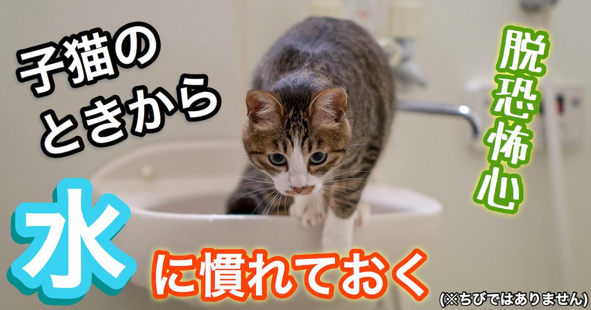 子猫から水に慣れさせる