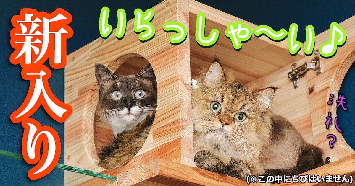 新入り猫さんいらっしゃい