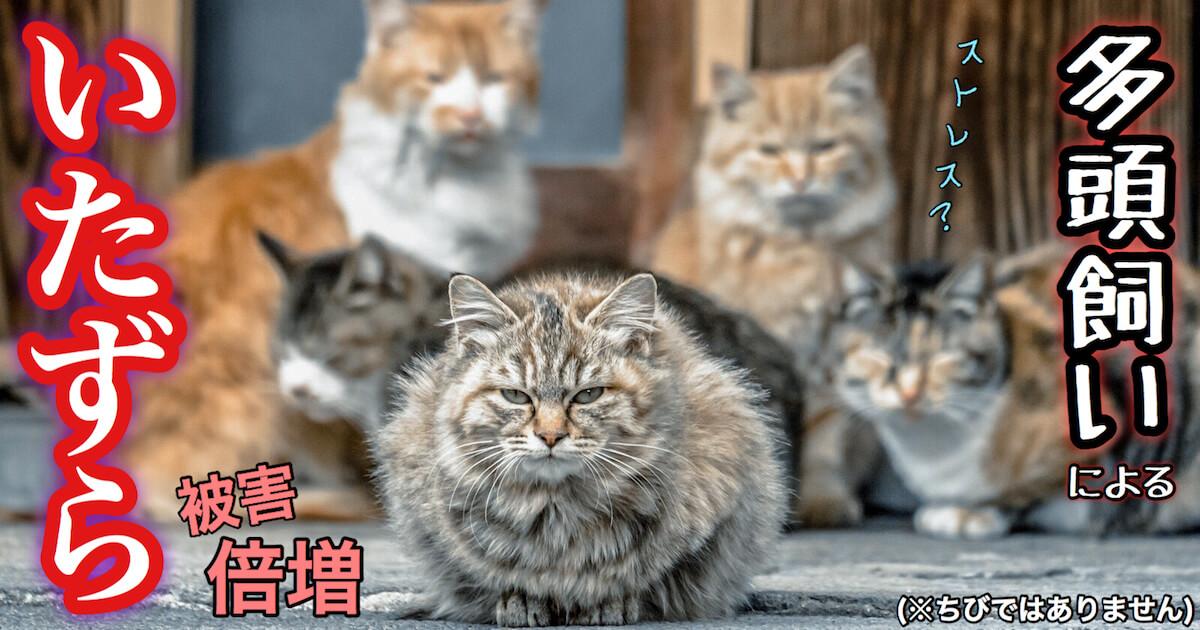 猫の多頭飼いによるストレスでのいたずら