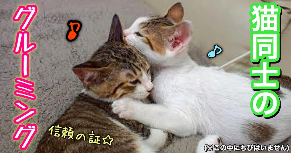 猫同士のグルーミング