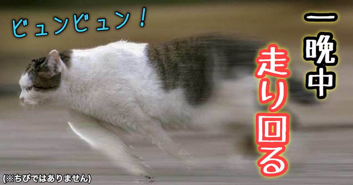 多頭飼いで一晩中走り回る猫
