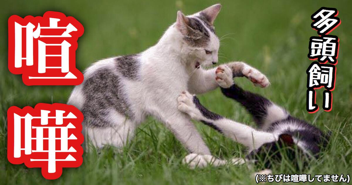 多頭飼い猫の喧嘩