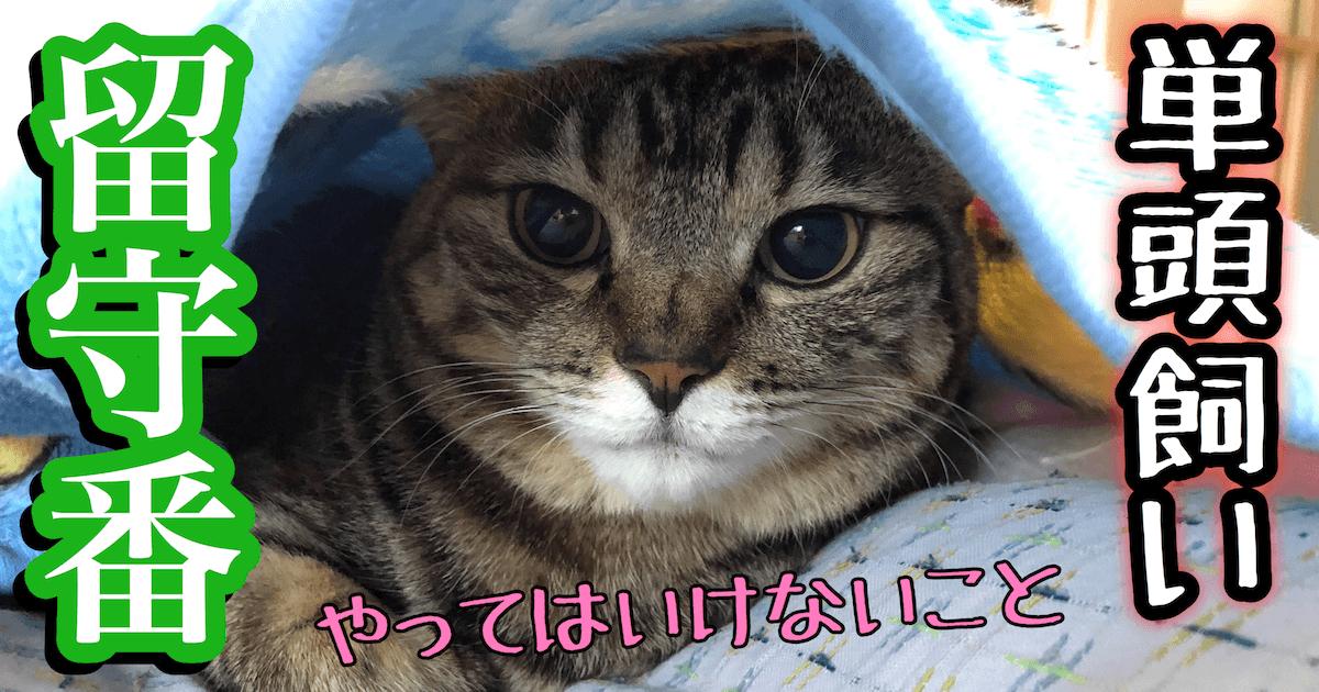 単頭飼い猫の留守番時の注意点