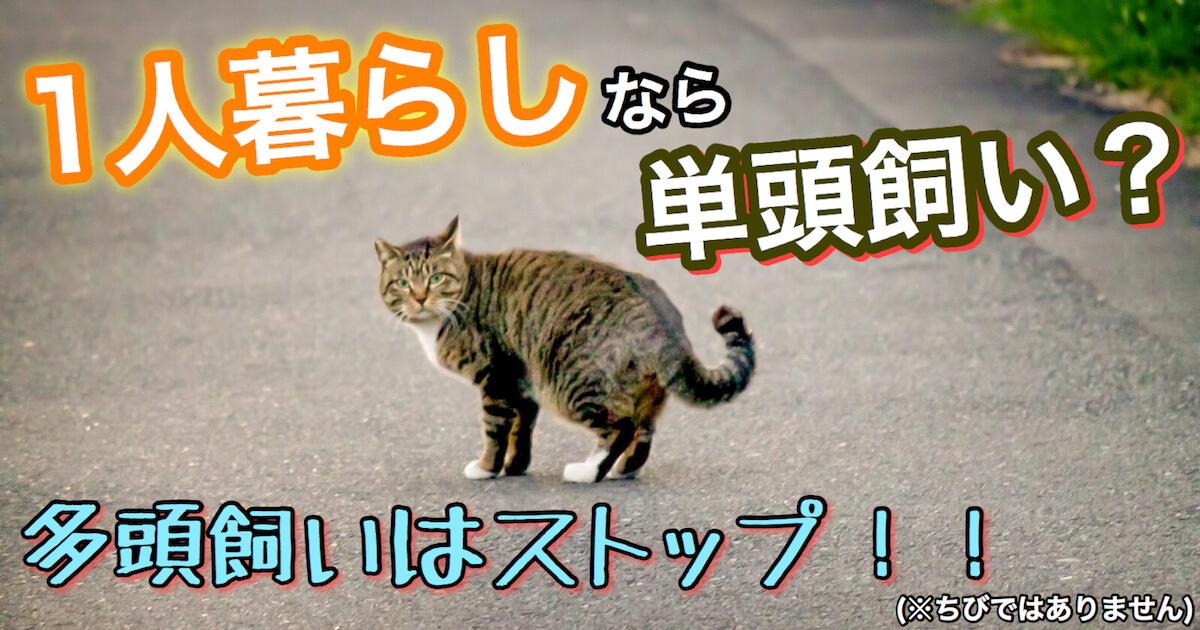 一人暮らしの猫の単頭飼い?