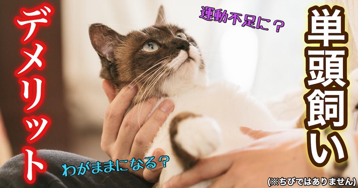 猫の単頭飼いのデメリット