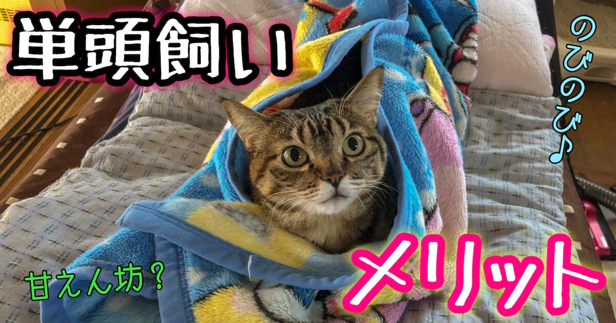 猫の単頭飼いのメリット