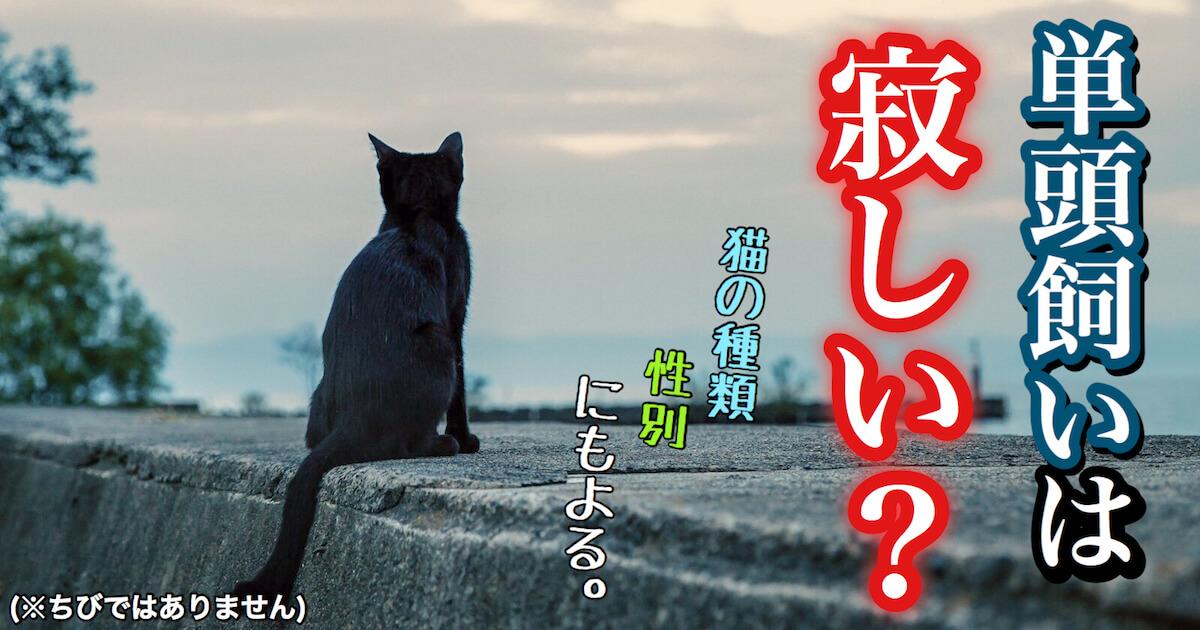 単頭飼い猫は寂しい?