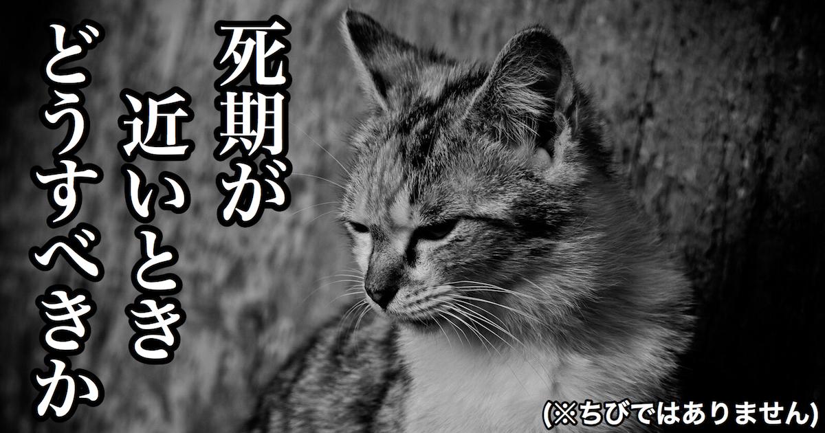 猫の死期が近いときどうすべきか