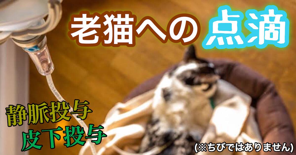 老猫への点滴方法(静脈投与・皮下投与)
