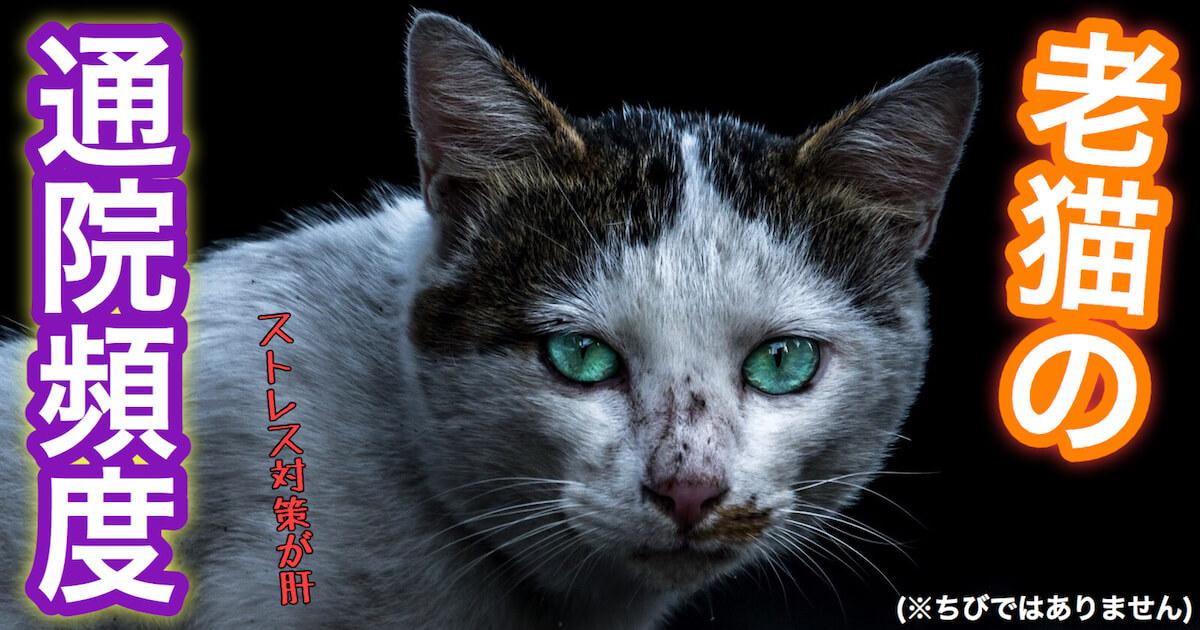 老猫の通院頻度