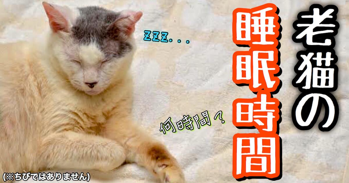 老猫の睡眠時間