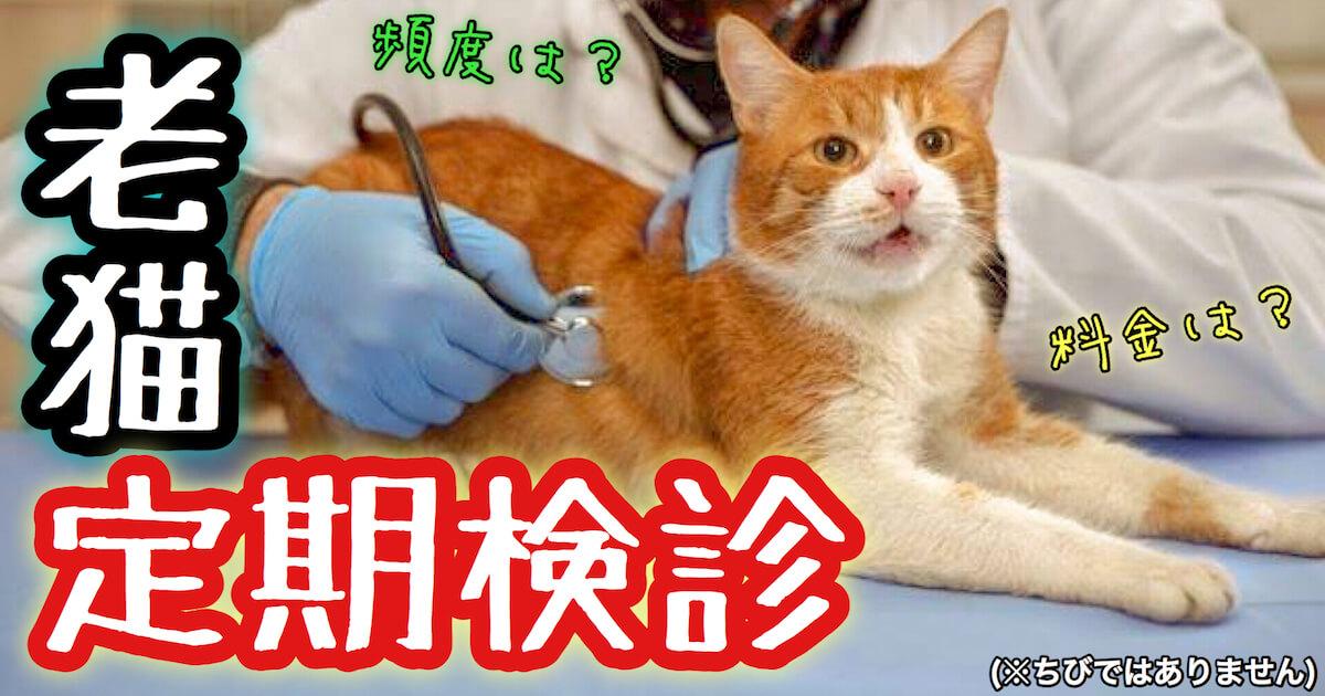 老猫の定期検診