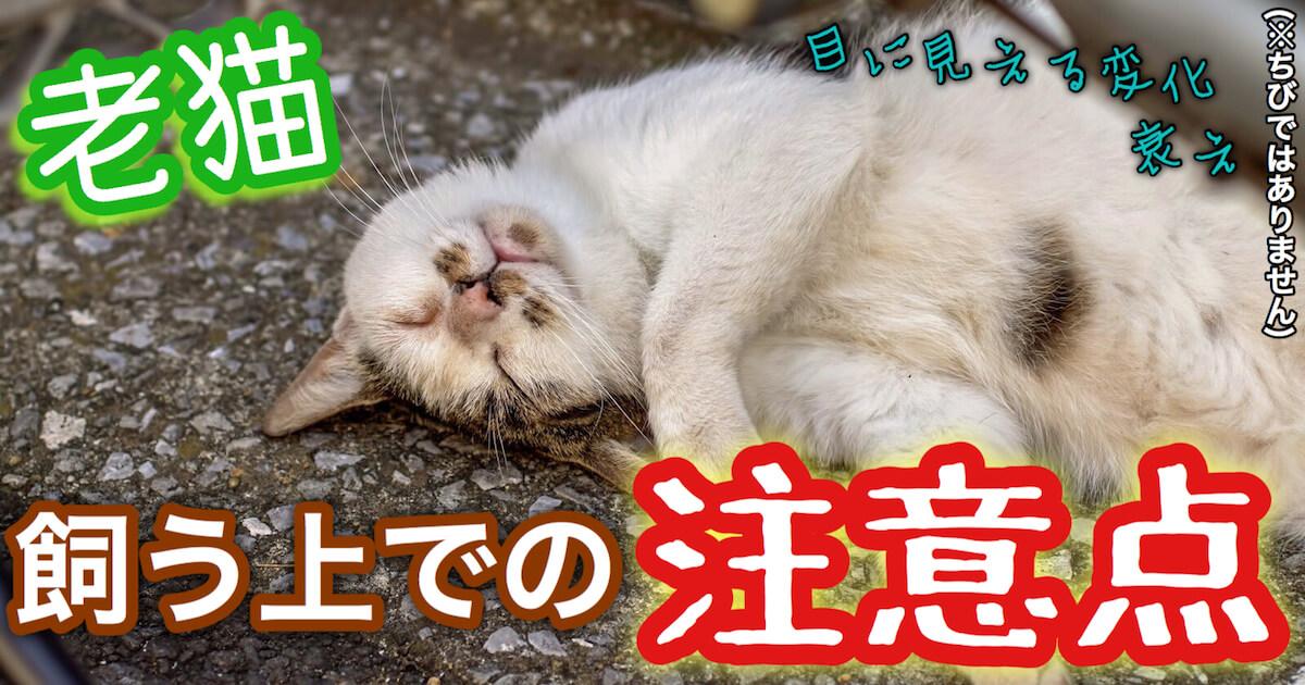 老猫を飼う上での注意点