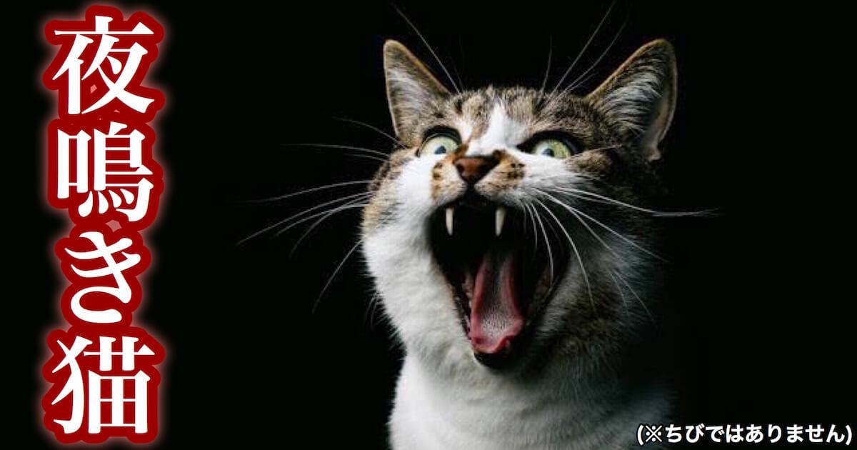 猫が夜泣きする原因