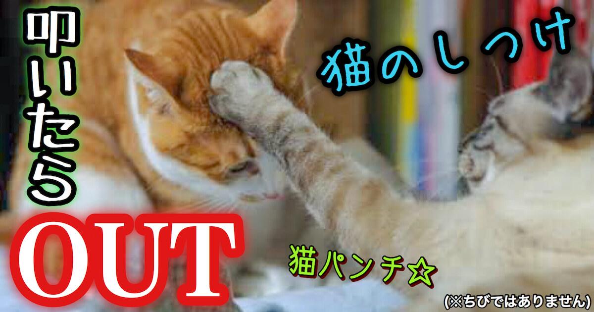 猫のしつけは叩いたらOUT