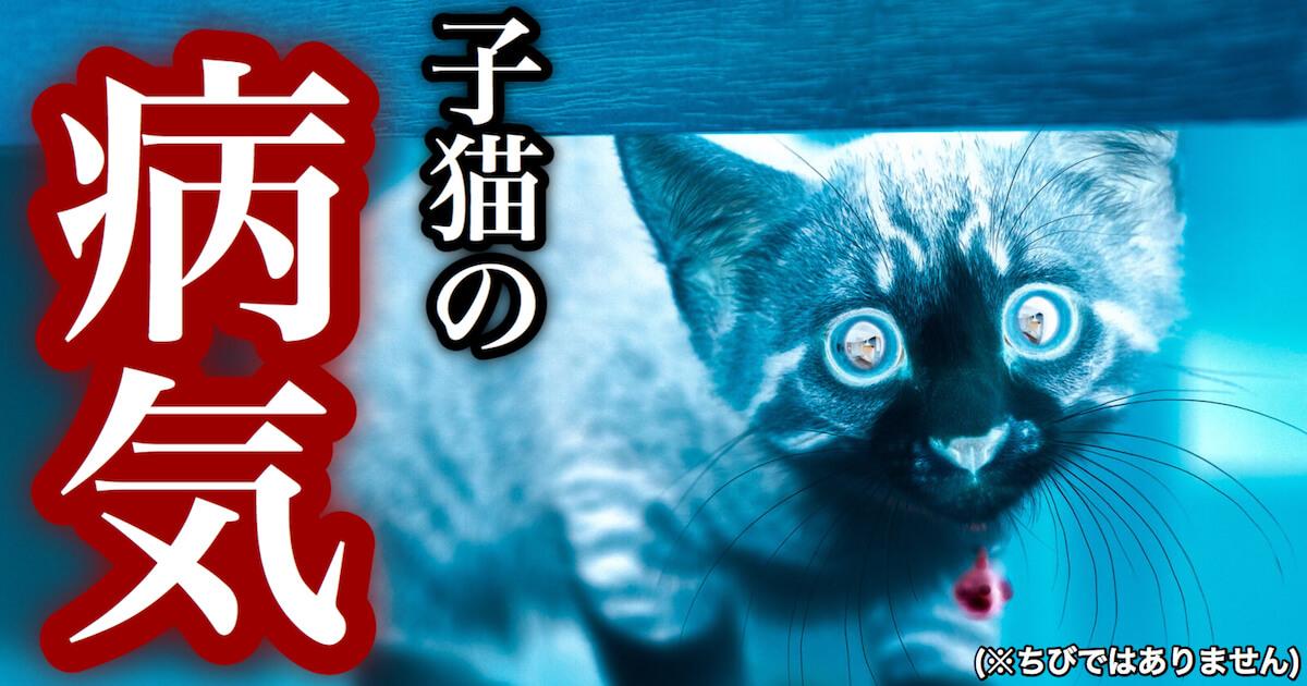 子猫の病気
